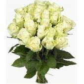 欧洲The blanc roses