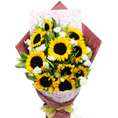 活力四射 向日葵是向往光明之花