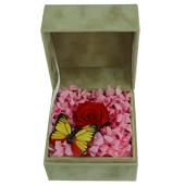 保鲜花—红蝴蝶 爱比繁花美