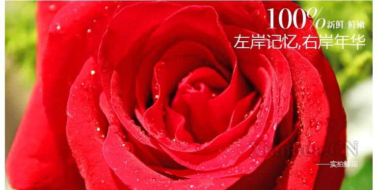 玫瑰叶子花围巾织法图解