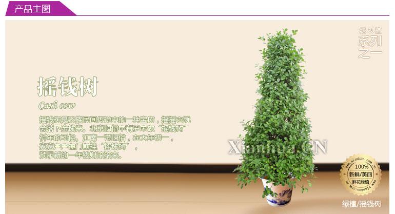 彩绘植物花卉ppt素材