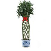 富贵竹笼 寓意花开富贵、竹报平安