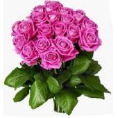 欧洲The pink roses